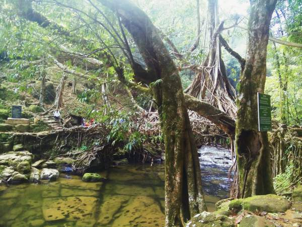 Living root bridge in Mawlynnong